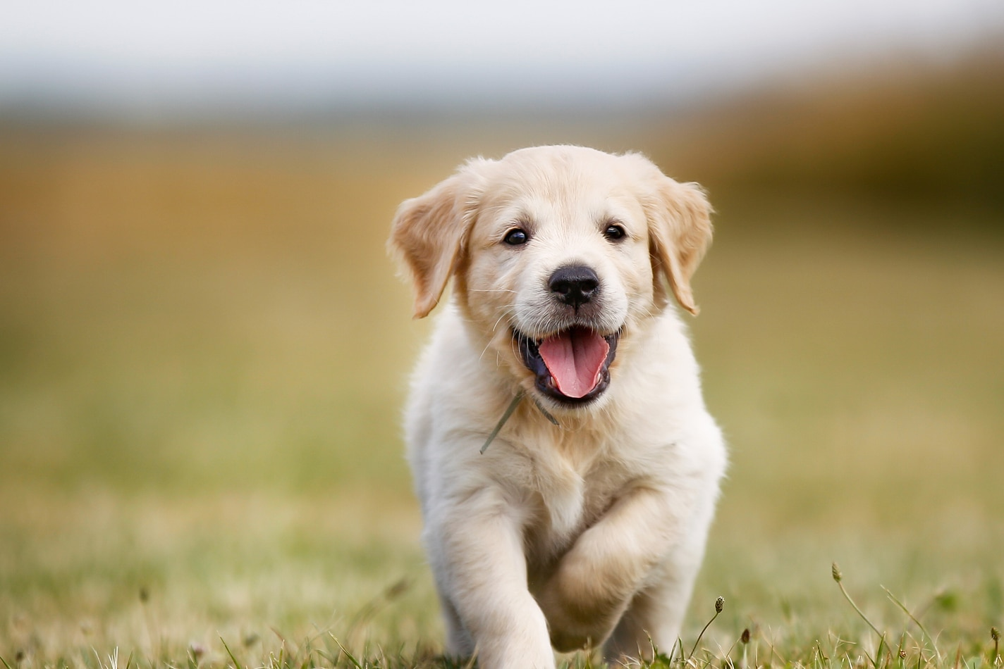 Психология щенка | Хиллс