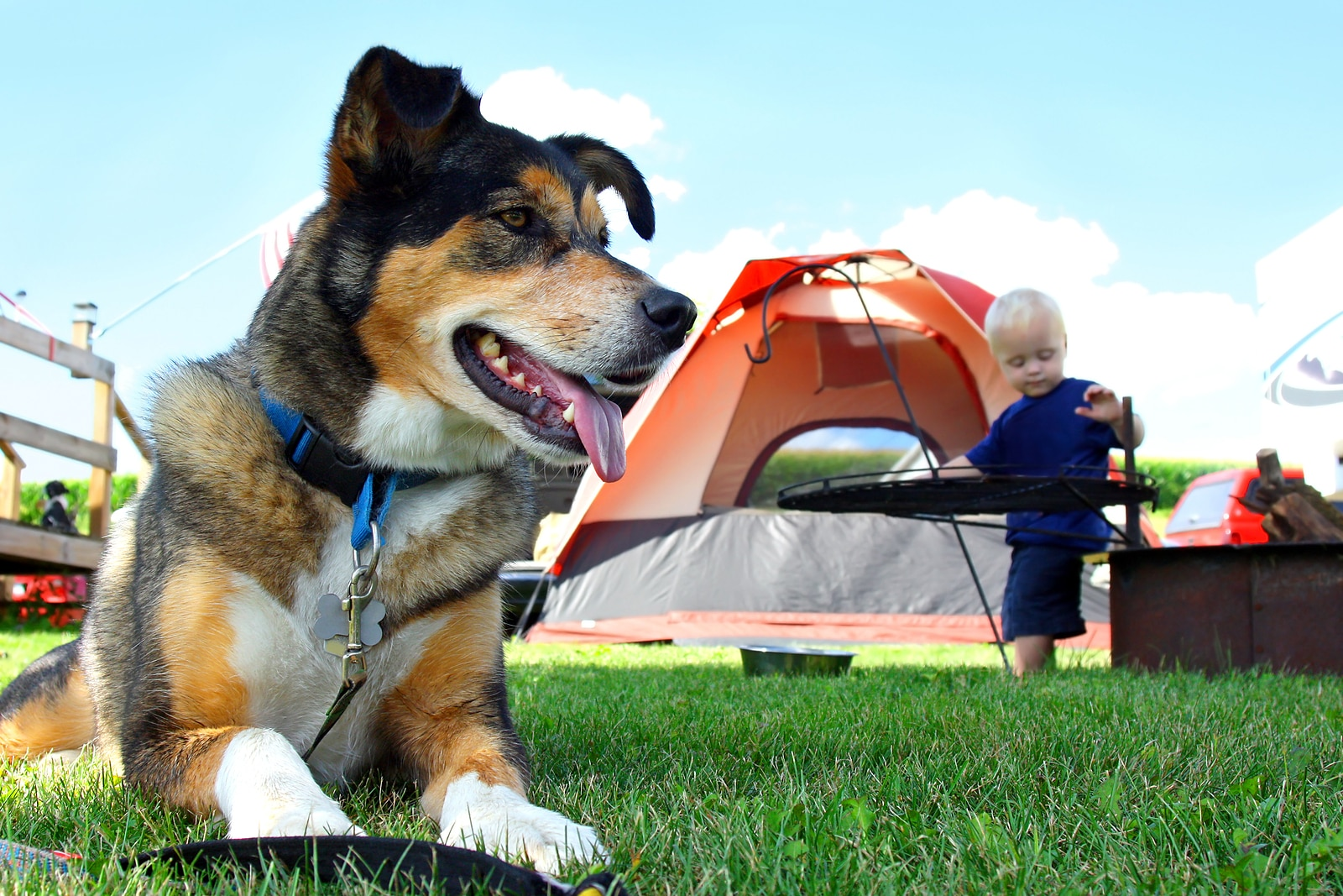 A happy friendly German Shepherd dog is laying at a campground by a tent and fireplace as a baby plays in the background
