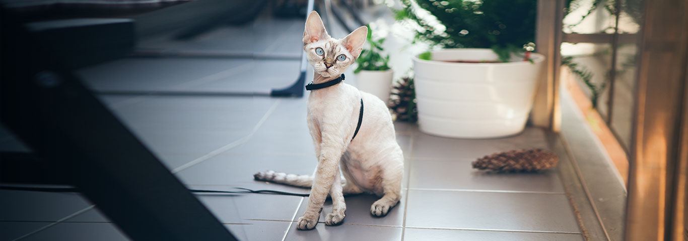 Порода кошек Девон Рекс | 480x1366